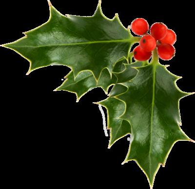 Christmas-Holly-psd97547